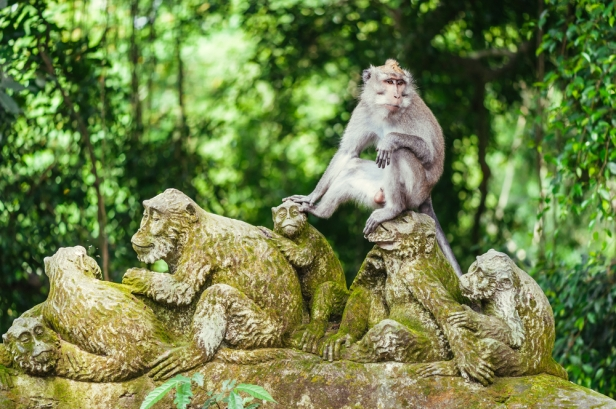 Bali 3D2N Itinerary - Monkey Sanctuary