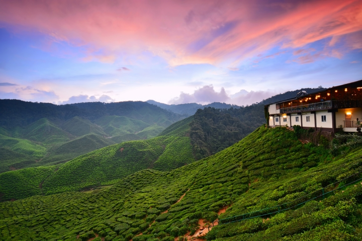 Most Romantic Places in Southeast Asia - Cameron Highlands