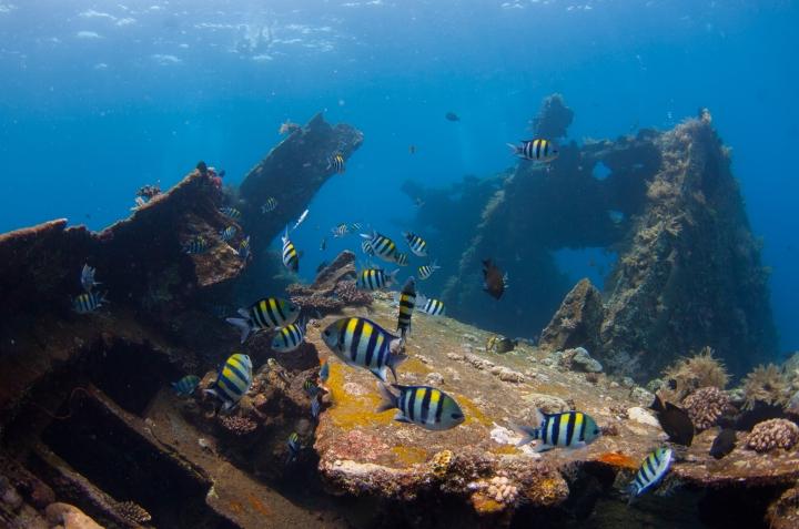 Liberty Wreck, Bali, Indonesia.  © Christian Loader / scubazooimages.com