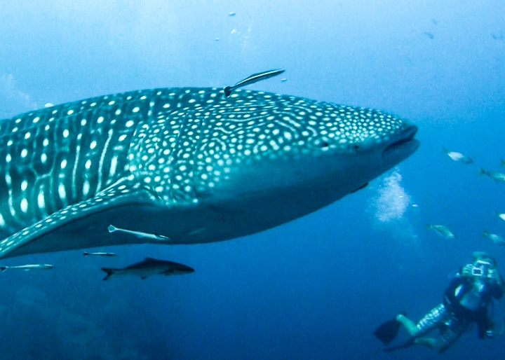 koh-tao-scuba-dive-videography-course-photography-1-of-7