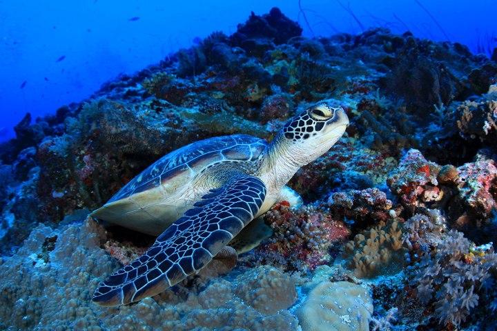 Turtle-palau