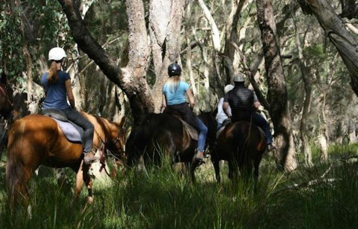 1800-trail-rides