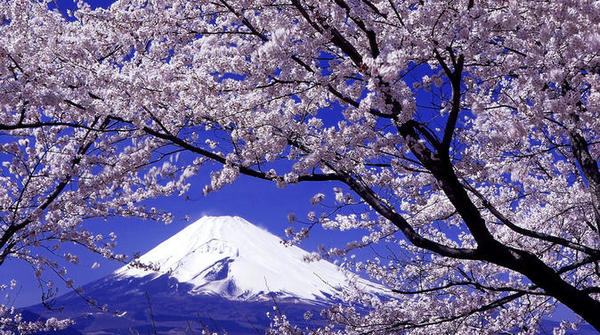 day-trip-to-yamanashi-prefecture-including-wine-and-fruit-tasting-in-tokyo-260944.jpg