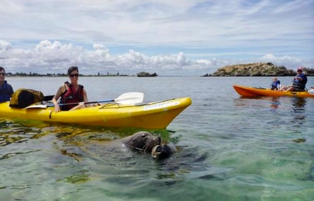 seal-and-penguin-islands-sea-kayak-tour-from-perth-in-perth-194061