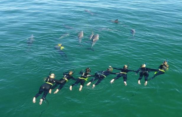 slide-03-dolphin-swim-group