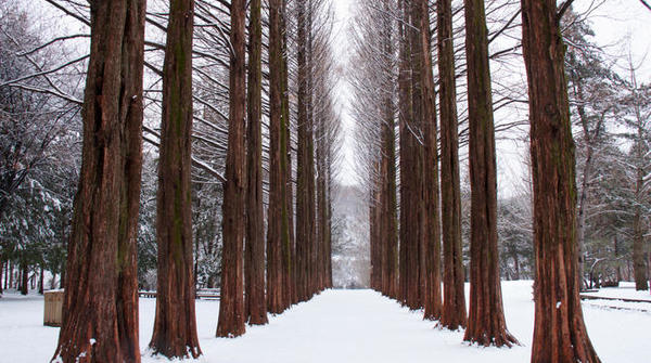 winter-sonata-tv-tour-on-nami-island-from-seoul-in-seoul-139212