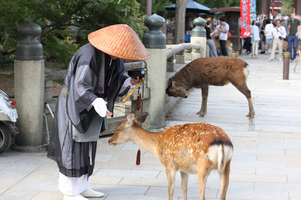 7 must visit places for the animal lover in japan � blog
