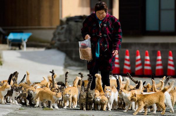 aoshima-cat-island-japan