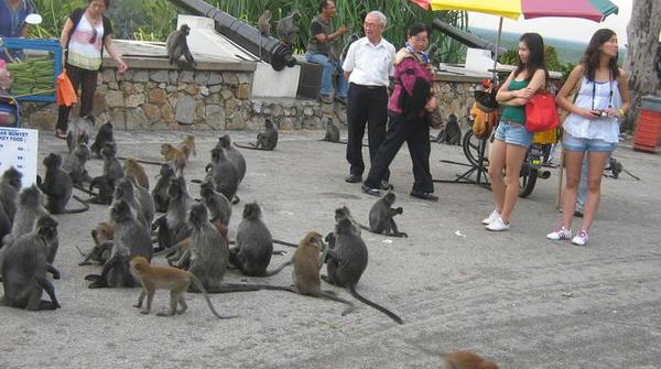monkey-feeding-and-firefly-evening-tour-from-kuala-lumpur-in-kuala-lumpur-270353