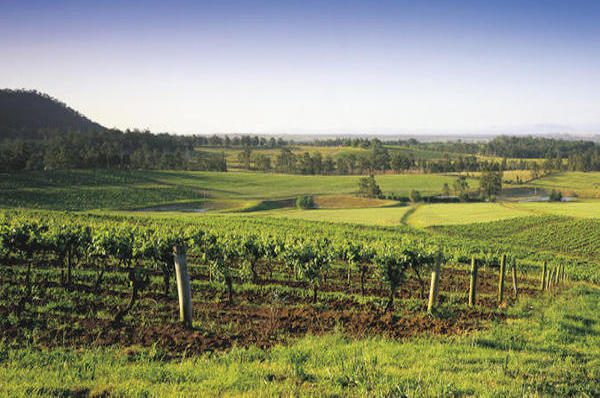 wine tasting romantic tour sydney