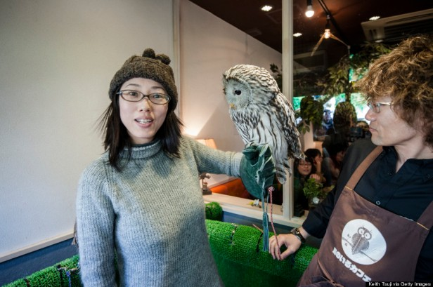 People Appreciate Exotic Birds At Bird Cafe In Tokyo